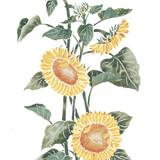Standing Sunflower Wall Stencil by DeeSigns
