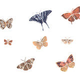 Butterfly Collection Wall Stencil by DeeSigns