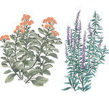 "Spring Garden ""A"" Flowers Wall Stencil by DeeSigns"