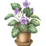 African Violet Wall Stencil by The Mad Stencilist