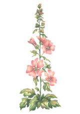 Barnsley Stalk Flower Wall Stencil by The Mad Stencilist