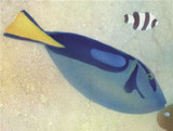 Hippo Tang Fish Wall Stencil by The Mad Stencilist