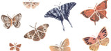 Butterfly and Insect Wall Stencils