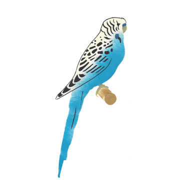 Parakeet Bird Wall Stencil