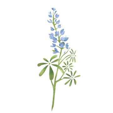 Texas Bluebonnet Flower Wall Stencil