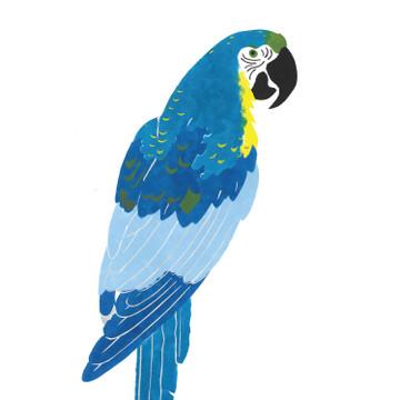 Smaller Macaw Wall Stencil