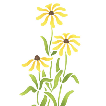 Black-eyed Susans Flower Wall Stencil
