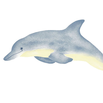 Large Single Dolphin Wall Stencil