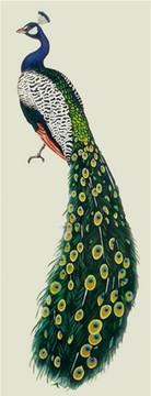 Peacock by Jeff Raum SKU #JR03
