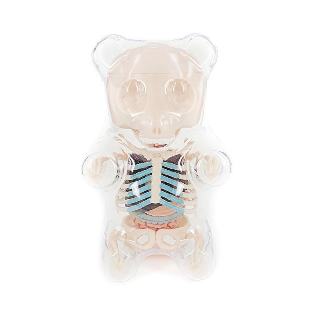 Gummi Bear Funny Anatomy