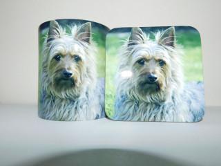Australian Silky Terrier Dog Mug and Coaster Set
