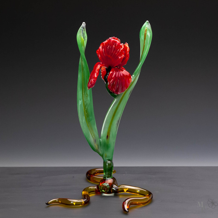 Vibrant red glass iris flower that flows in the light surrounding it