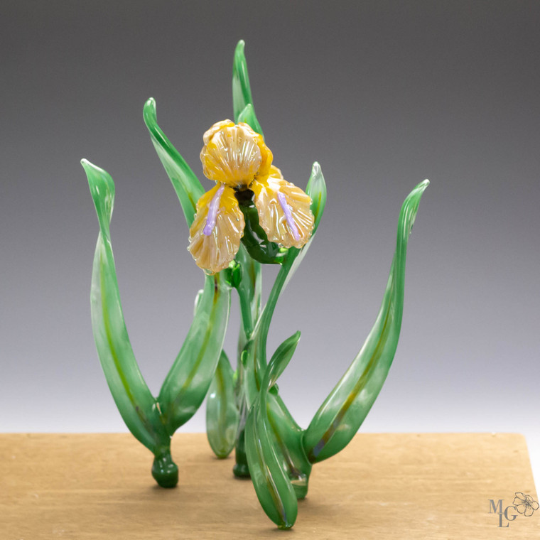 Beautiful glass iris flower with a metallic sheen that dances in the sparkling light