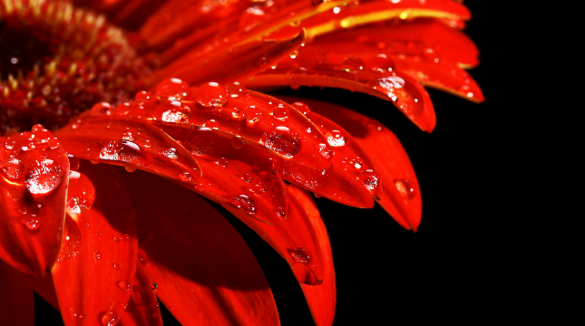 glass-flower-product-card.png
