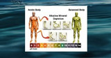 Many Ways to Alkalize Your Body & Why