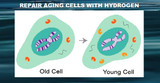 Free-Hydrogen and Cellular Aging (Senescence)