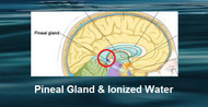 The Pineal Gland & Alkaline Ionized Water