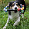 Braided fleece dog tug toy - Duck Toller madness!