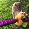 Agility tug toy with real sheepskin fur and bungee.