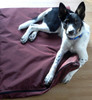 Water-repellent dog bed covers keep bedding clean and dry.