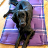 Flat coat retriever on washable crate pad.