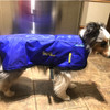 Dog ice coat cold therapy.