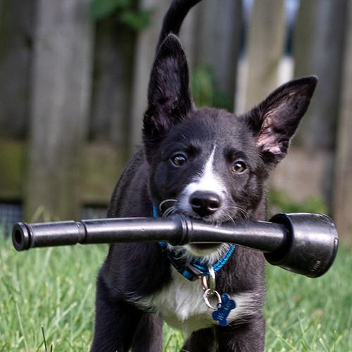 Dog milker dog toy.