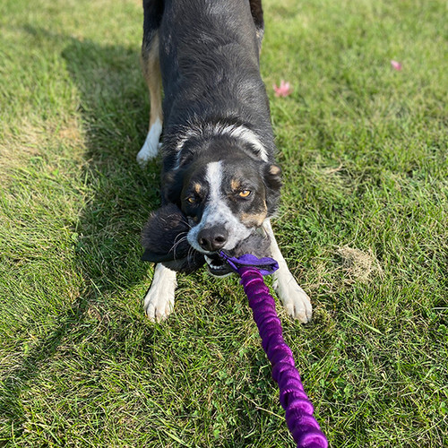Real rabbit stick fur dog tug with reinforced mesh and a squeaker.