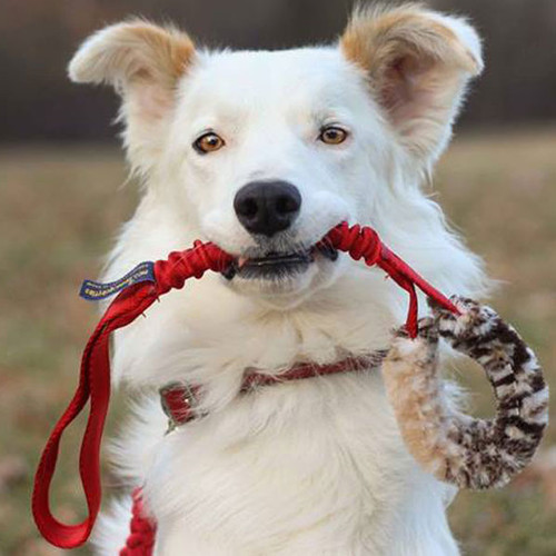 Faux fur dog tug toy with bungee.