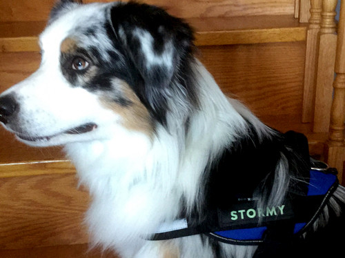 Julius K9, two-side harness name tags.