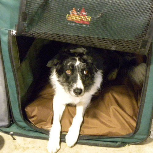Pet bed covers Canada - fit xsmall to Xlarge dog crates.