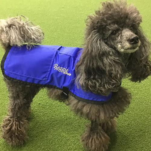 Dog ice coat offers cold or heat therapy.