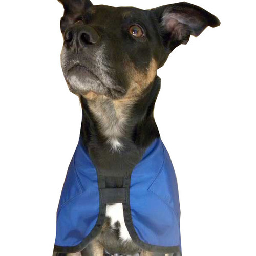 Dog ice coat - comfortable elastic neck.