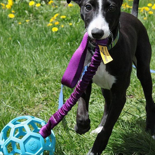 Add a handle extension to make bungee dog tug. Toy not included.