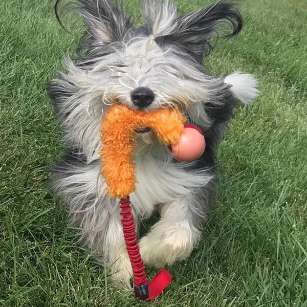 Real sheepskin fur agility toy for dogs with Planet Dog ball.
