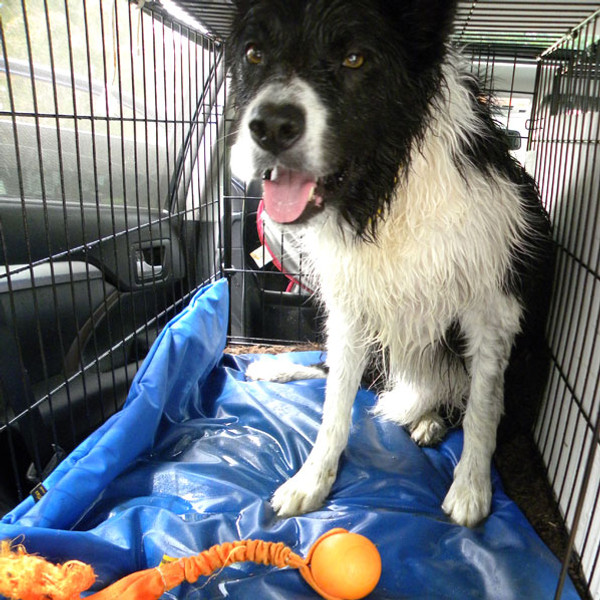 Waterproof pet bed covers keep crate beds dry.