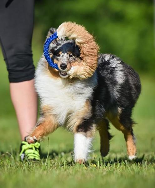 Circular non-toxic rabbit fur dog toy