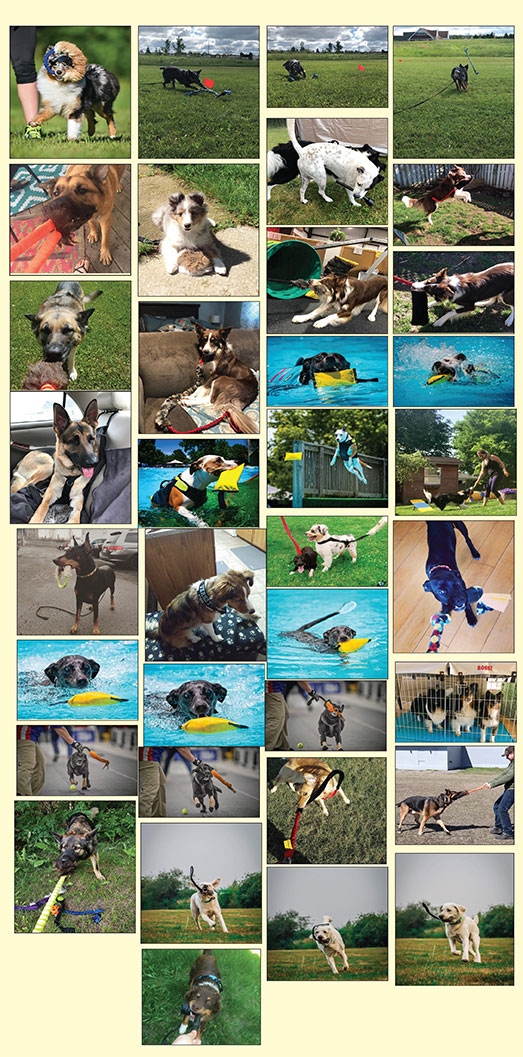 photo-contest-entries-aug-10.jpg