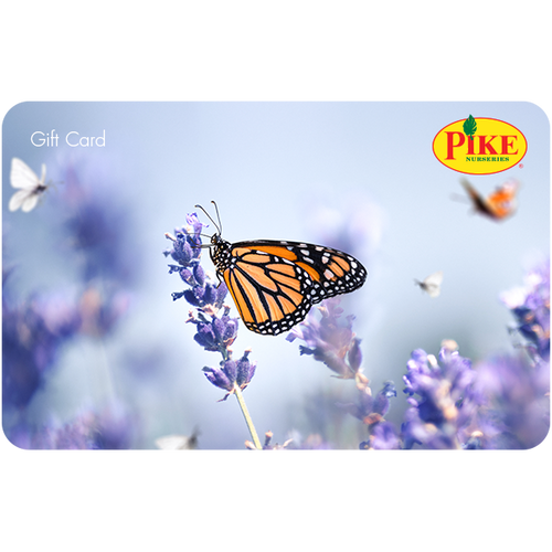 Digital Lavender eGift Card