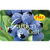 Digital Blueberry eGift Card