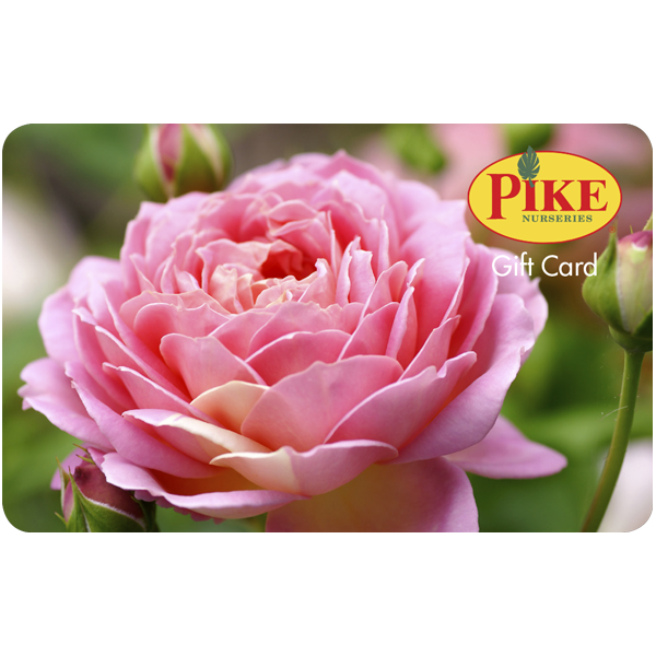 Digital Rose eGift Card