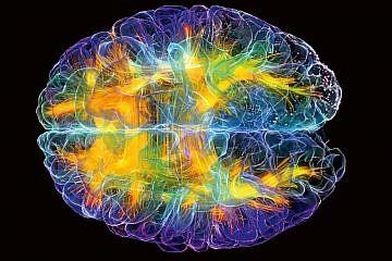 brain-outline.jpg