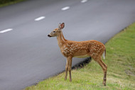 The Causes and Effects of Deer Overpopulation