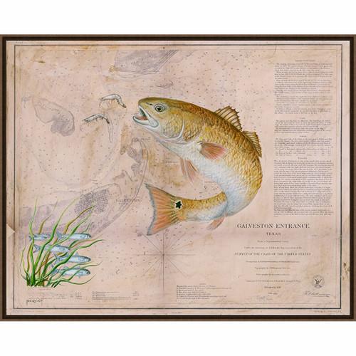 Texan Redfish Framed Canvas