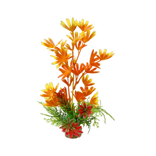 Gravel Bush Plant Orange, Large
