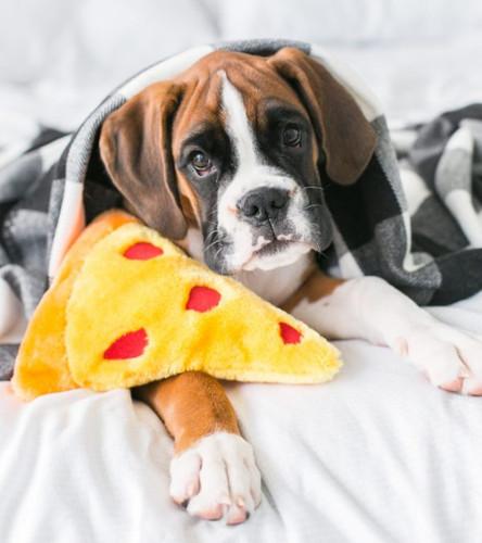 NonNomz Pizza Toy
