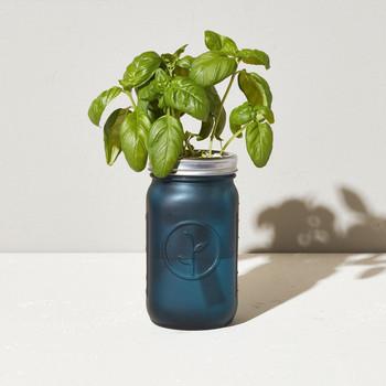 Modern Sprout Garden Jar - Basil