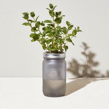 Modern Sprout Garden Jar - Mint