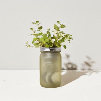 Modern Sprout Garden Jar - Oregano