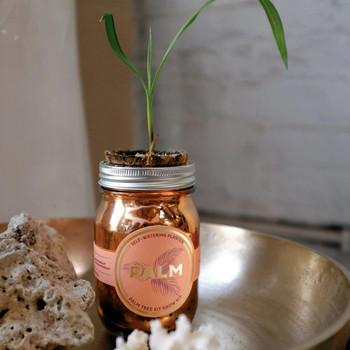 Modern Sprout Garden Jar - Palm Tree